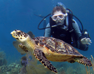 Open Water diver sees a turtle