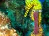 seahorse-doms-around-coral