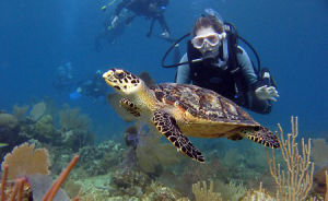 A diver watches a turtle on the reef